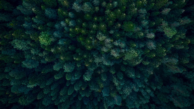 Forest from above; European insurance companies pursue climate-friendly investment policy